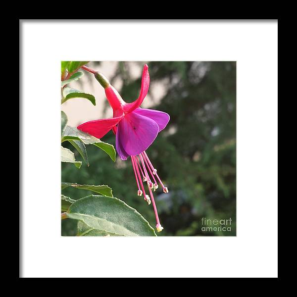 Framed Print featuring the photograph Purple Bell by Paola Baroni