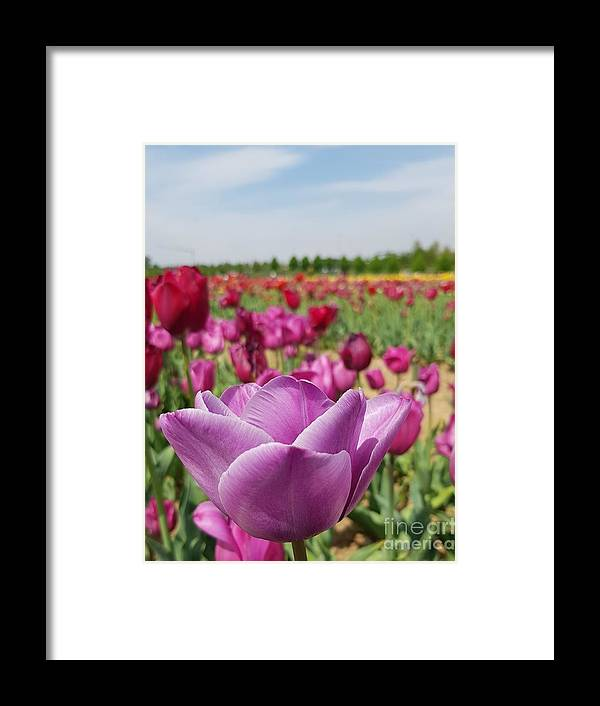 Tulip Framed Print featuring the photograph Purple Tulip by Paola Baroni