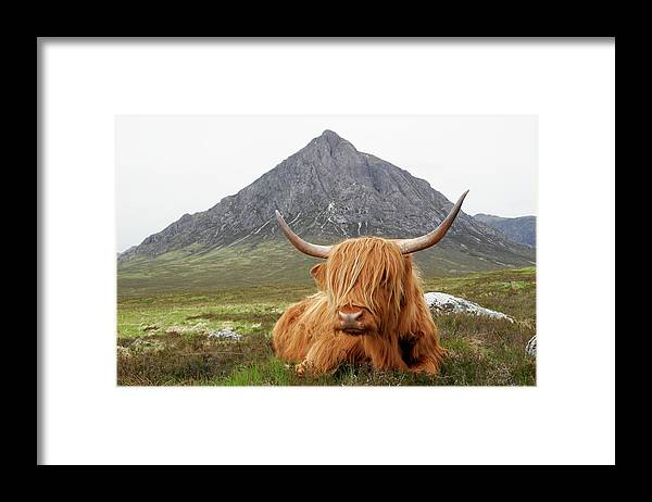 Horned Framed Print featuring the photograph Quintessential Scotland by Thedman