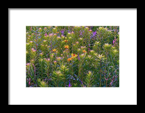 Framed Print featuring the photograph Rainbow Garden by Joel Friedman