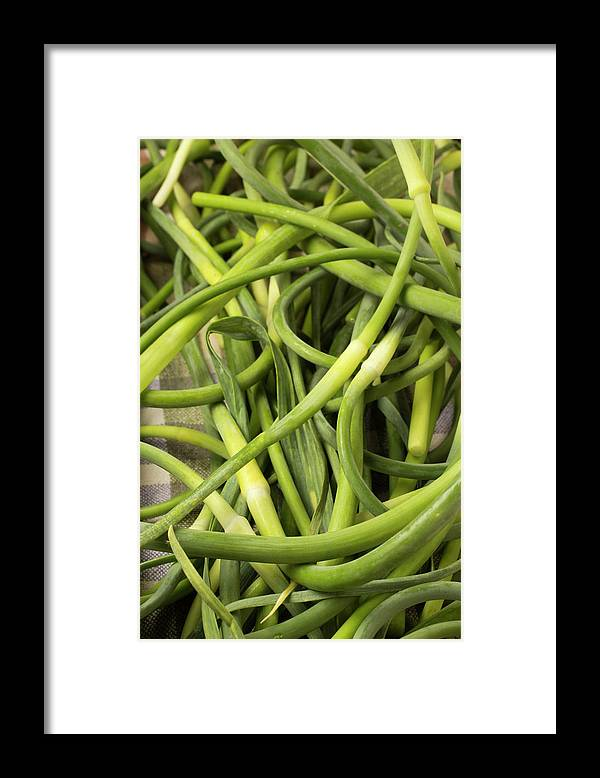 Season Framed Print featuring the photograph Raw Garlic Scapes by Brian Yarvin