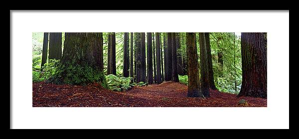 Redwood Trees Framed Print featuring the photograph Redwoods 1 by Wayne Bradbury Photography