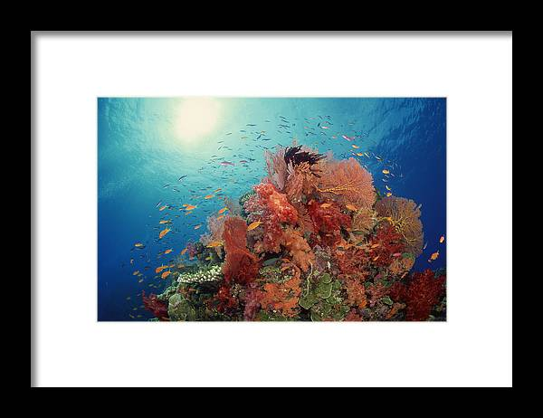 Underwater Framed Print featuring the photograph Reef Scenic Of Hard Corals , Soft by Comstock