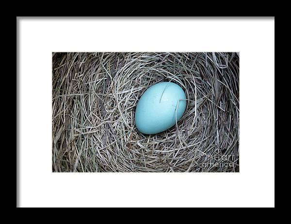 Bird Framed Print featuring the photograph Robin's Egg by Edward Fielding