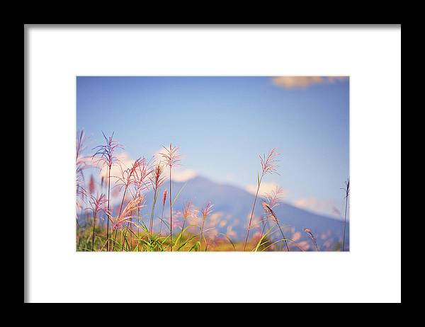 Scenics Framed Print featuring the photograph Rushes by Photo By Glenn Waters In Japan