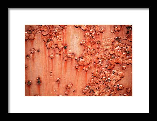 Rust Framed Print featuring the photograph Rust by Trevor Slauenwhite