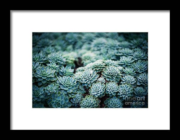 Small Framed Print featuring the photograph Rustic Macro Shot Of Cactus - Tropical by Naturephotography