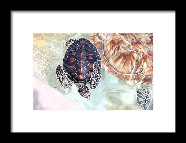 Underwater Framed Print featuring the photograph Sea Turtle by Alyssa B. Young