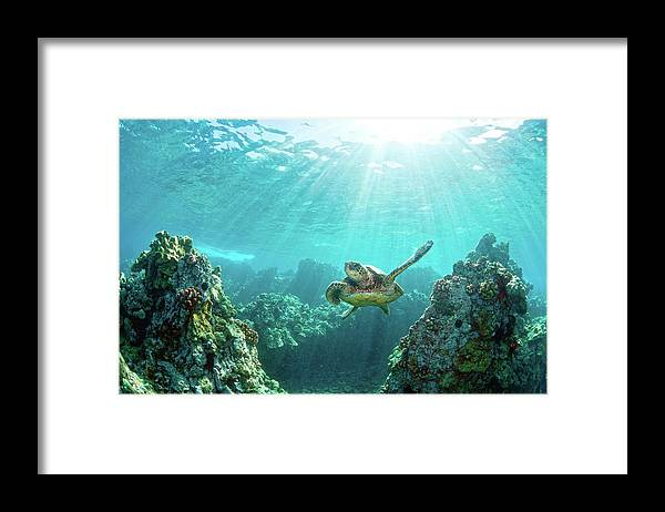Underwater Framed Print featuring the photograph Sea Turtle Coral Reef by M.m. Sweet