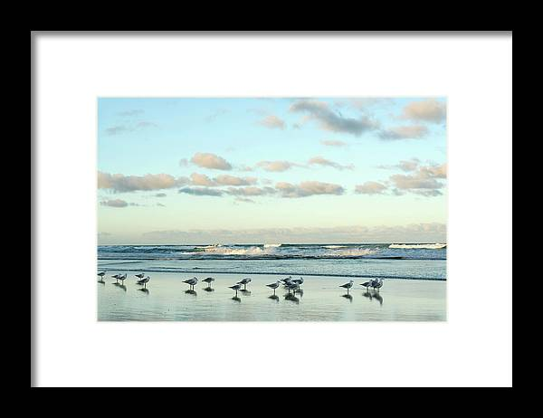 Working Framed Print featuring the photograph Seagulls In Heaven V2 by Breecedownunder