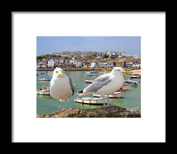 Big Framed Print featuring the photograph Seagulls In St Ives Harbour Cornwall by Jaroslava V
