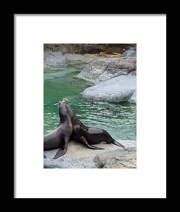 Blue Framed Print featuring the photograph Seal by Aswini Moraikat Surendran