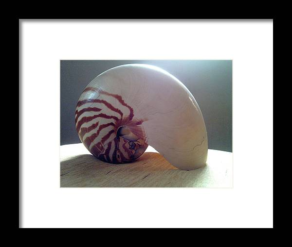 Shell Framed Print featuring the photograph Seashell by Barista Uno