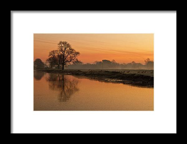 Scenics Framed Print featuring the photograph Sheep Sunrise by Paulscreen