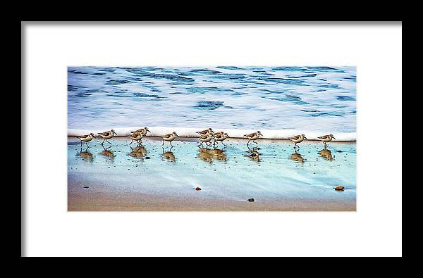Animal Themes Framed Print featuring the photograph Shorebirds by Vanessa Mccauley