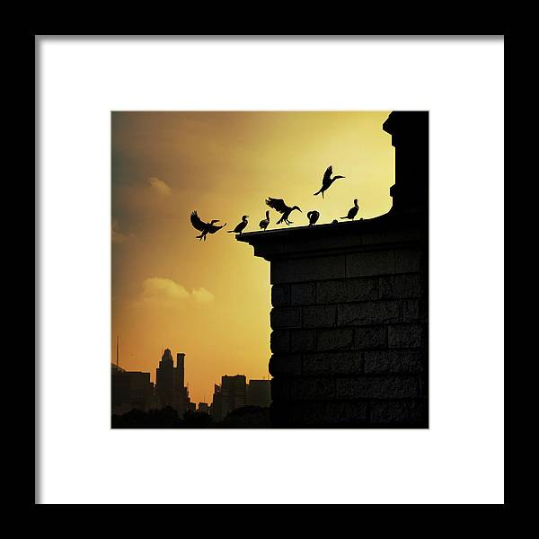 Central Park Framed Print featuring the photograph Silhouettes Of Cormorants by Istvan Kadar Photography