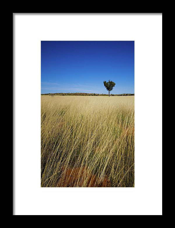 Scenics Framed Print featuring the photograph Small Single Tree In Field by Universal Stopping Point Photography