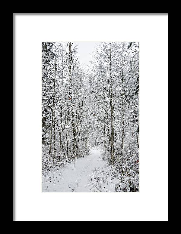 Snow Framed Print featuring the digital art Snow Covered Trees Line The Path by Kirt Tisdale