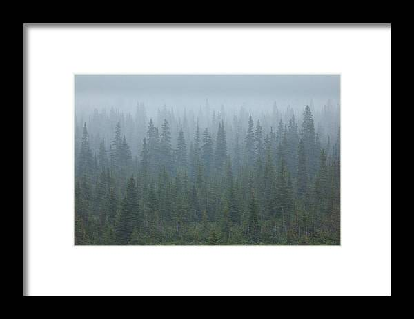 Unesco Framed Print featuring the photograph Snow Storm In The Forests Of Jasper by Mint Images/ Art Wolfe
