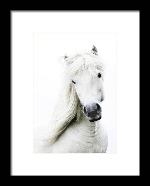 Horse Framed Print featuring the photograph Snowhite by Gigja Einarsdottir