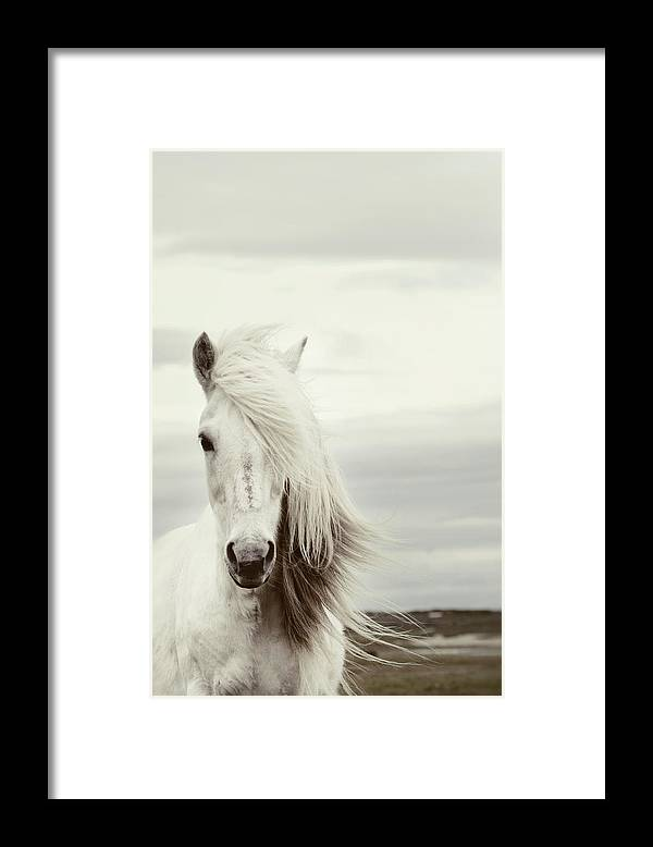 Horse Framed Print featuring the photograph ísold by Gigja Einarsdottir