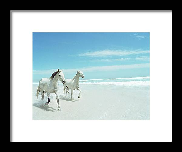 Horse Framed Print featuring the photograph South Africa, Cape Town, Norrdhoek, Two by Stuart Mcclymont