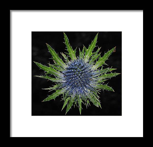 Insect Framed Print featuring the photograph Spider by Love Photography