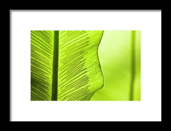 Outdoors Framed Print featuring the photograph Spores Of A Fern by By Ken Ilio
