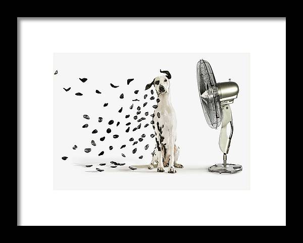Pets Framed Print featuring the photograph Spots Flying Off Dalmation Dog by Gandee Vasan
