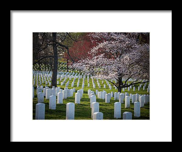Blossoms Framed Print featuring the photograph Spring At Arlington by Fred DeSousa