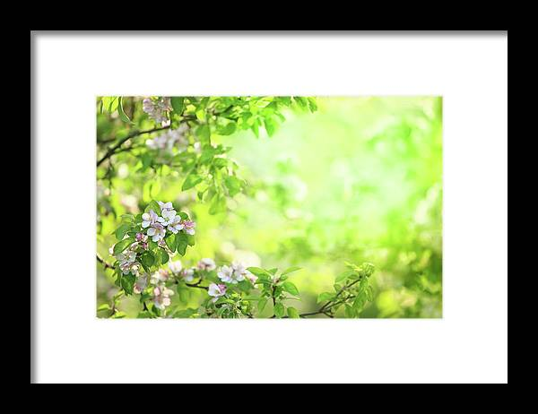 Grass Framed Print featuring the photograph Spring Flowers Blooming Orchard - by Konradlew