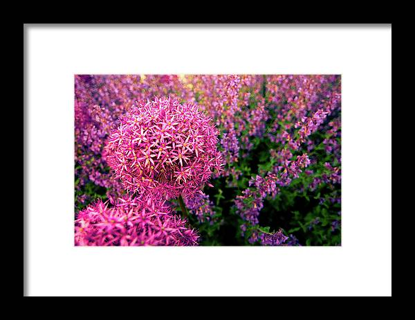 Purple Framed Print featuring the photograph Spring Flowers In Garden by Flash Parker