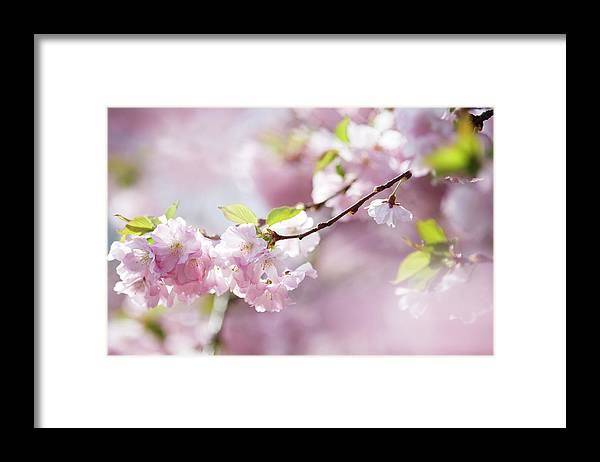People Framed Print featuring the photograph Spring by Goldhafen