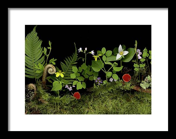 Framed Print featuring the photograph Springs Release by Sandi F Hutchins
