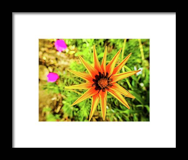 Nature Framed Print featuring the photograph Starflower by Matias Feucht