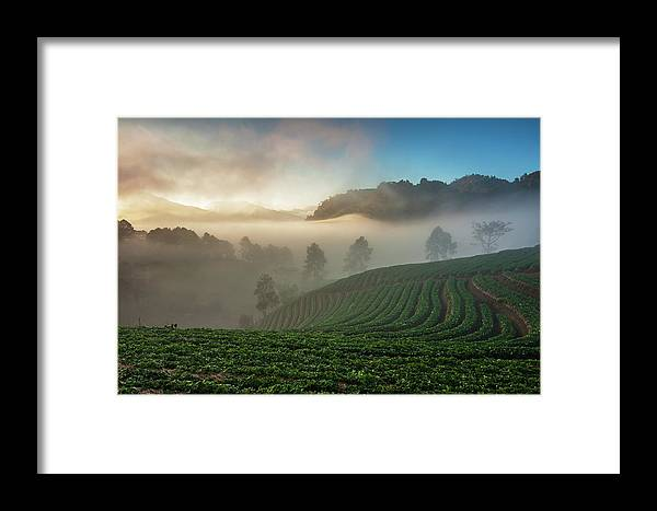 Tranquility Framed Print featuring the photograph Strawberry Farm by Nutexzles