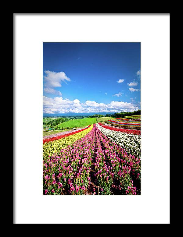 Tranquility Framed Print featuring the photograph Summer Of Furano by Grace's Photo