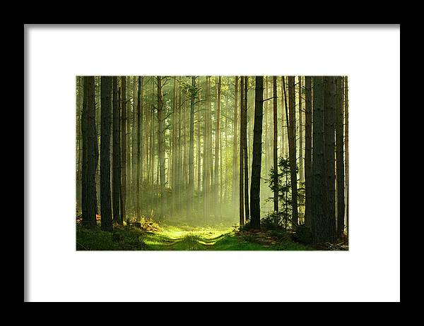 Scenics Framed Print featuring the photograph Sunbeams Breaking Through Pine Tree by Avtg