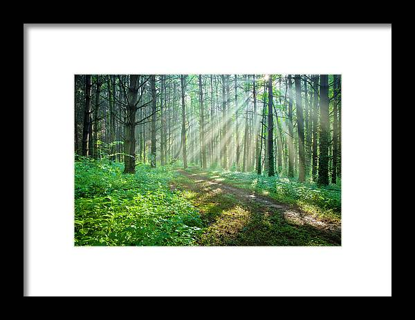 Outdoors Framed Print featuring the photograph Sunbeams Filtering Through Trees On A by Drnadig