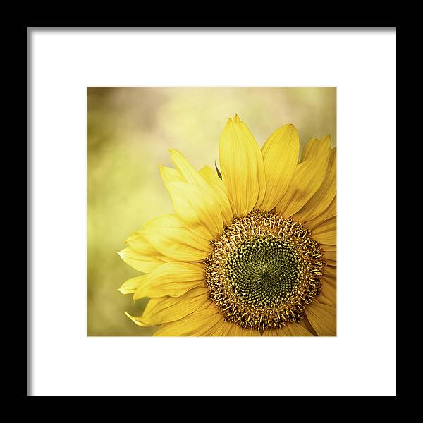 Outdoors Framed Print featuring the photograph Sunflower Blossom With Bokeh Background by Elisabeth Schmitt