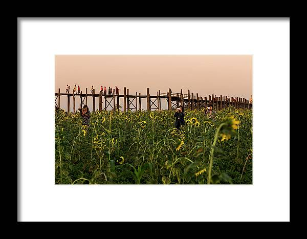 People Framed Print featuring the photograph Sunflower Field Below U Bein Bridge by Merten Snijders