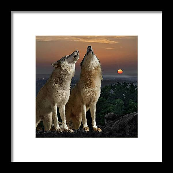 Wolf Framed Print featuring the photograph Sunset Harmony by Jeannee Gannuch