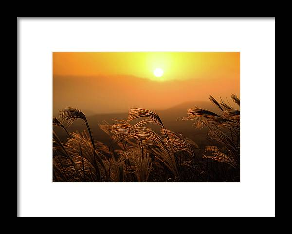 Tranquility Framed Print featuring the photograph Sunset, Reeds And Wind by Douglas Macdonald