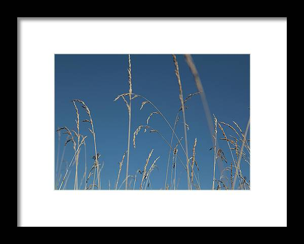 Tranquility Framed Print featuring the photograph Tall Grasses Swaying Against A Blue Sky by Lauren Krohn