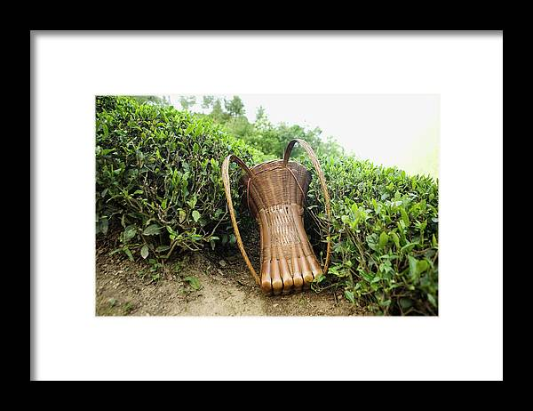 Outdoors Framed Print featuring the photograph Tea Pickers Basket by Russell Monk