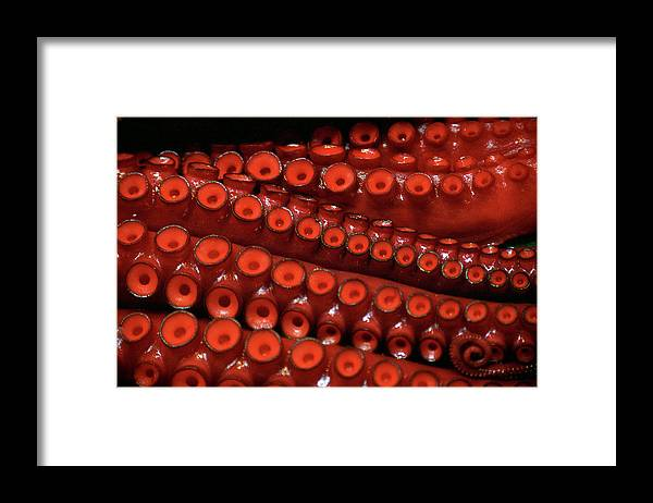 Animal Themes Framed Print featuring the photograph Tentacles,tsukiji Fish Market by Jason Quick