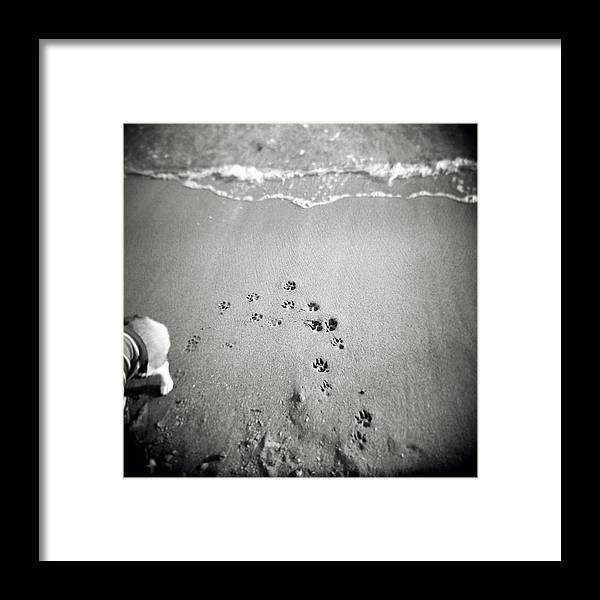Pets Framed Print featuring the photograph The Beach by Moaan