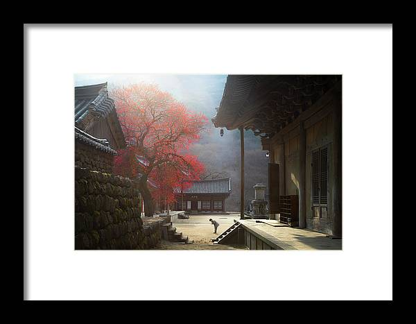 Tree Framed Print featuring the photograph The Fragrance Of A Thousand Years by Jaeyoun Ryu