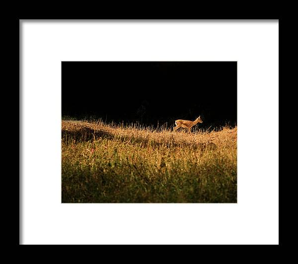 Grass Framed Print featuring the photograph The Lonely Deer by Arindam Sen Photography