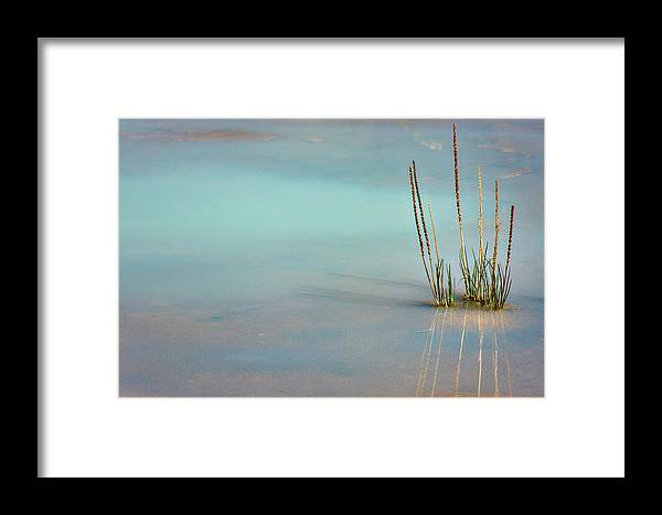 Bush Framed Print featuring the photograph Thermal Reflection by Lana Trussell